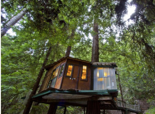 Redwood Tiny Treehouse Buy Redwood